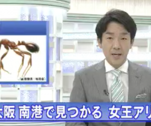ヒアリの猛毒の症状は?刺された時の対処法と予防策を調査