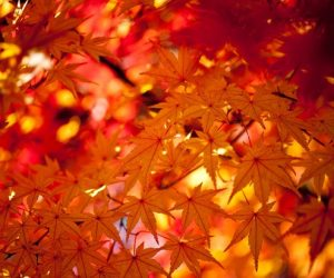 紅葉は京都が定番!穴場スポットは寺院で雰囲気が最高