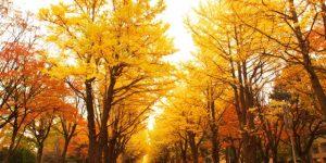 紅葉とドライブを楽しむ関東旅!日帰りでも満足の穴場スポット